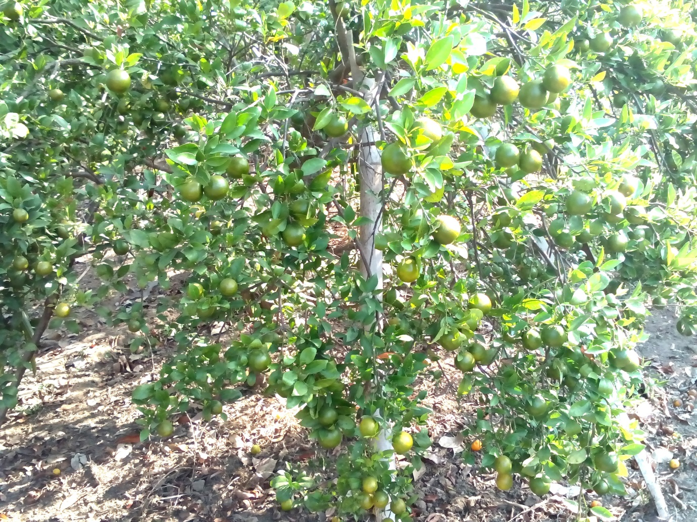 Pentingnya Belajar Dari Pengalaman Di Lapangan Dalam Usaha Pertanian